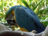 San Diego Parrots